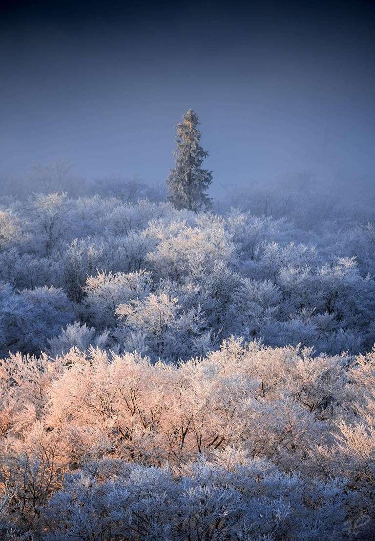 Erstes Licht - Pfälzerwald