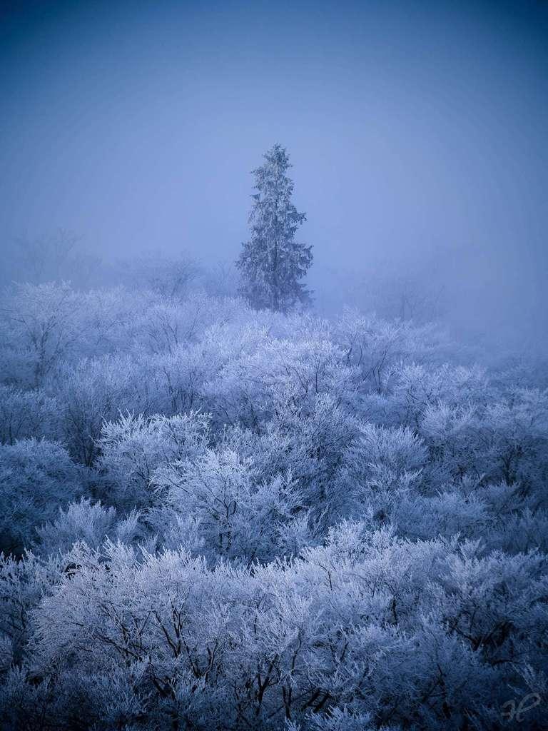 Einzelner Baum im Winter
