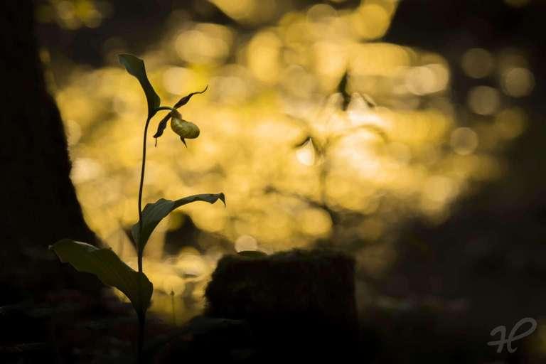 Schönheit im Licht