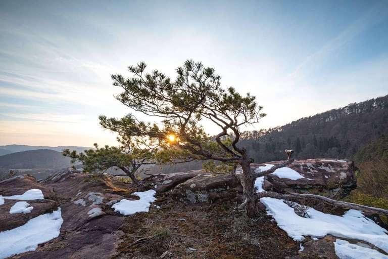 Winter im Pfälzerwald