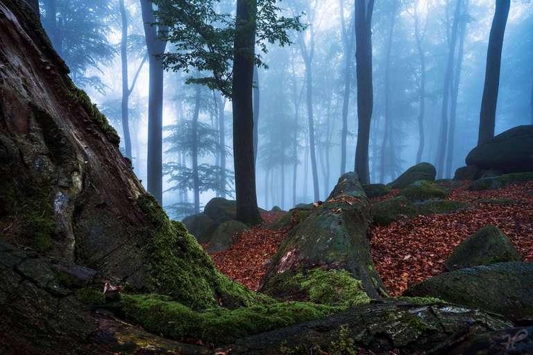 Baum und Fels im Odenwald