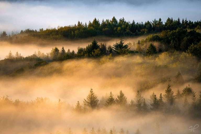 Nebelwelt Pfalz