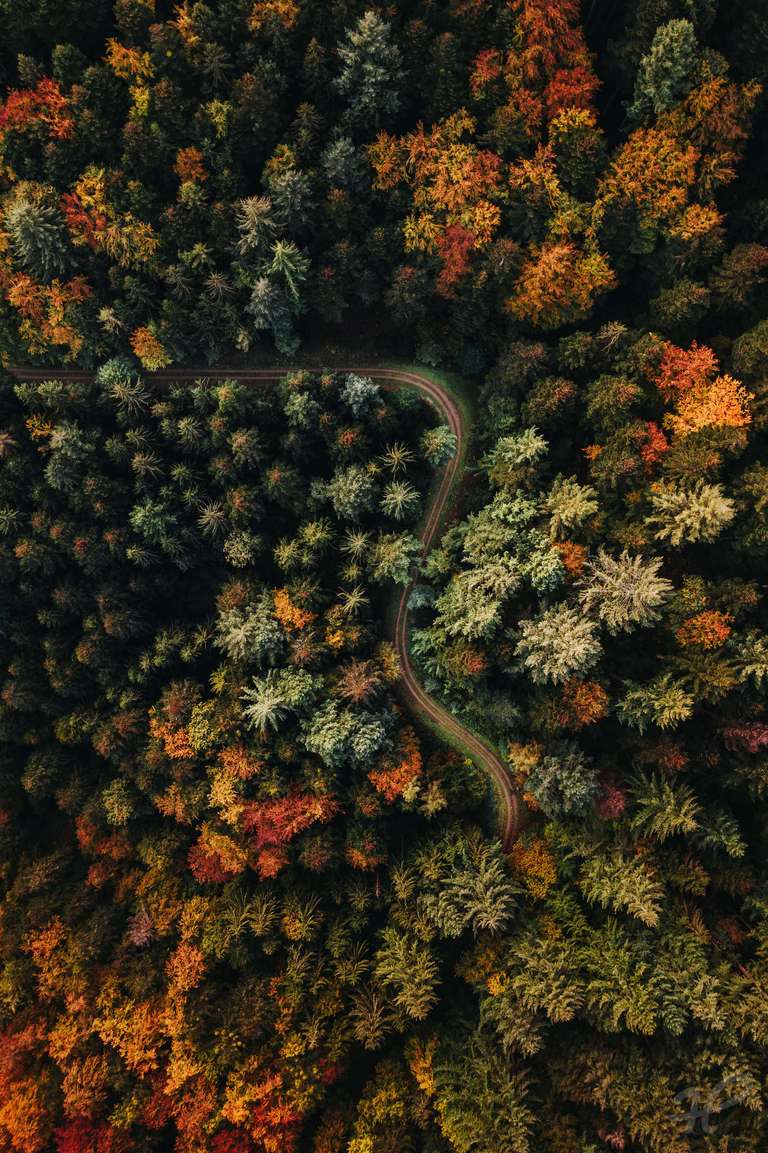 Colors of the great Black Forest