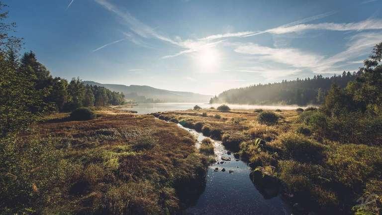 Der Schluchsee am Westufer von Aha
