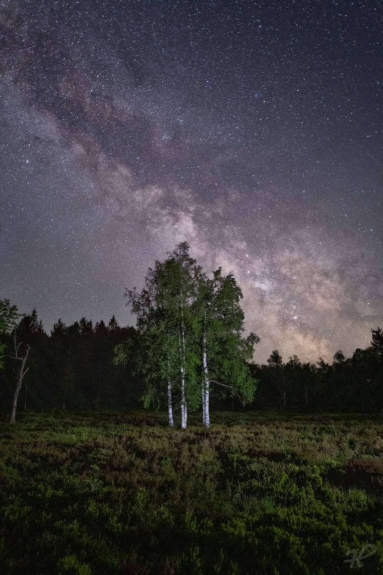 Birken unterm Sternenhimmel