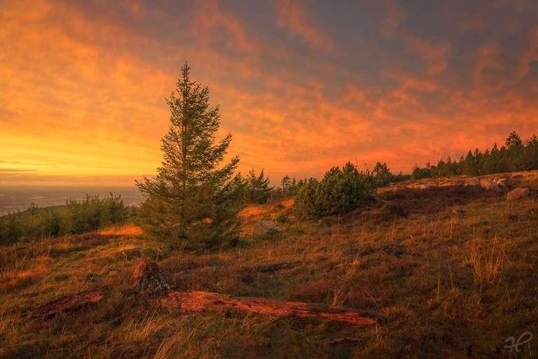Totholz im Sonnenuntergang III