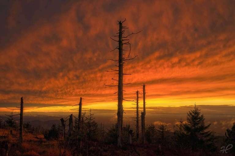 Totholz im Sonnenuntergang II