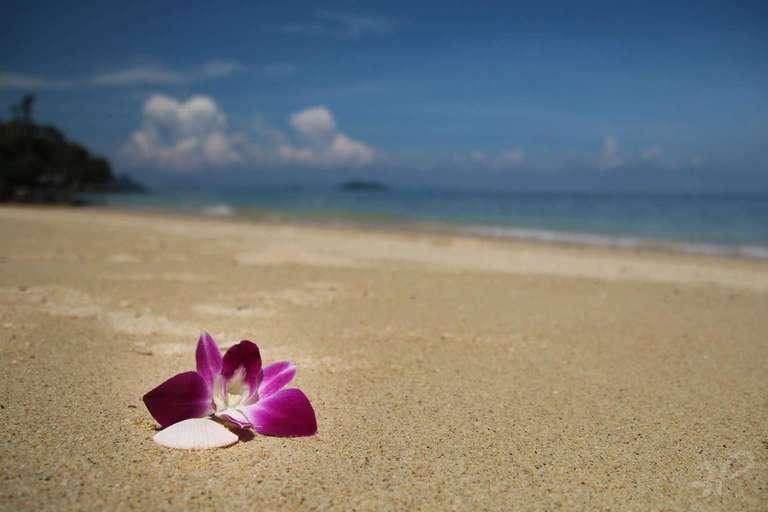 Die Strandblume