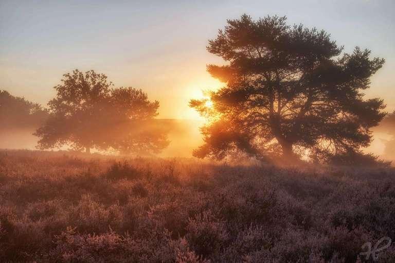 Heide nach Sonnenaufgang