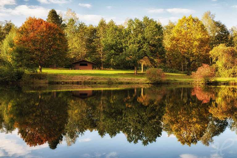 Goldener Herbst am Weiher