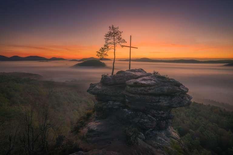 Ein Morgen im Pfälzerwald I
