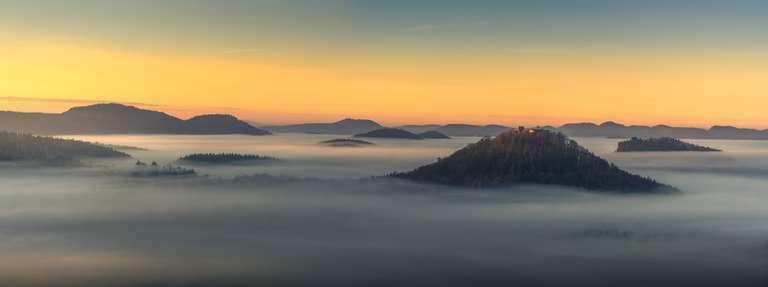 Ein Morgen im Pfälzerwald III