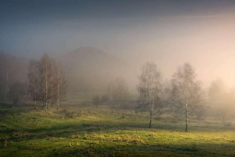 Ein Morgen im Pfälzerwald V