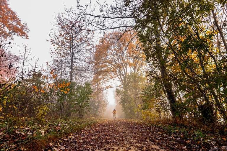 Der Wanderer im Nebel