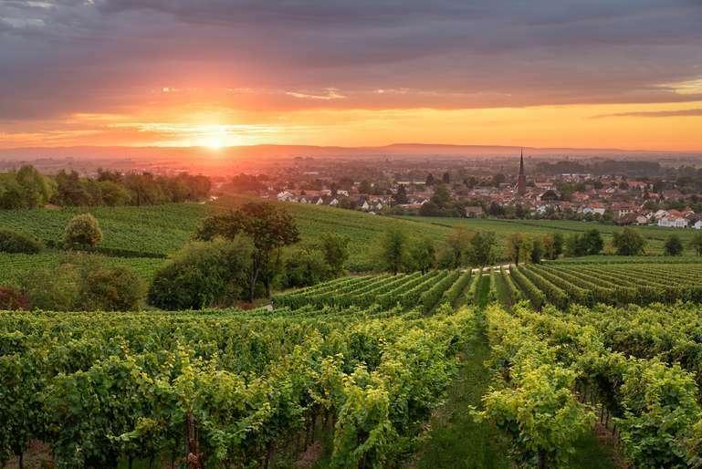 Sonnenaufgang über Deidesheim