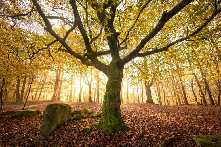 Herbstlicht im Pfälzerwald