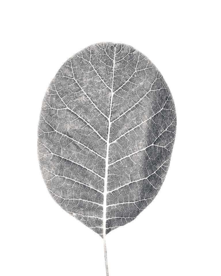 botanical study 69 // minimal botanical project