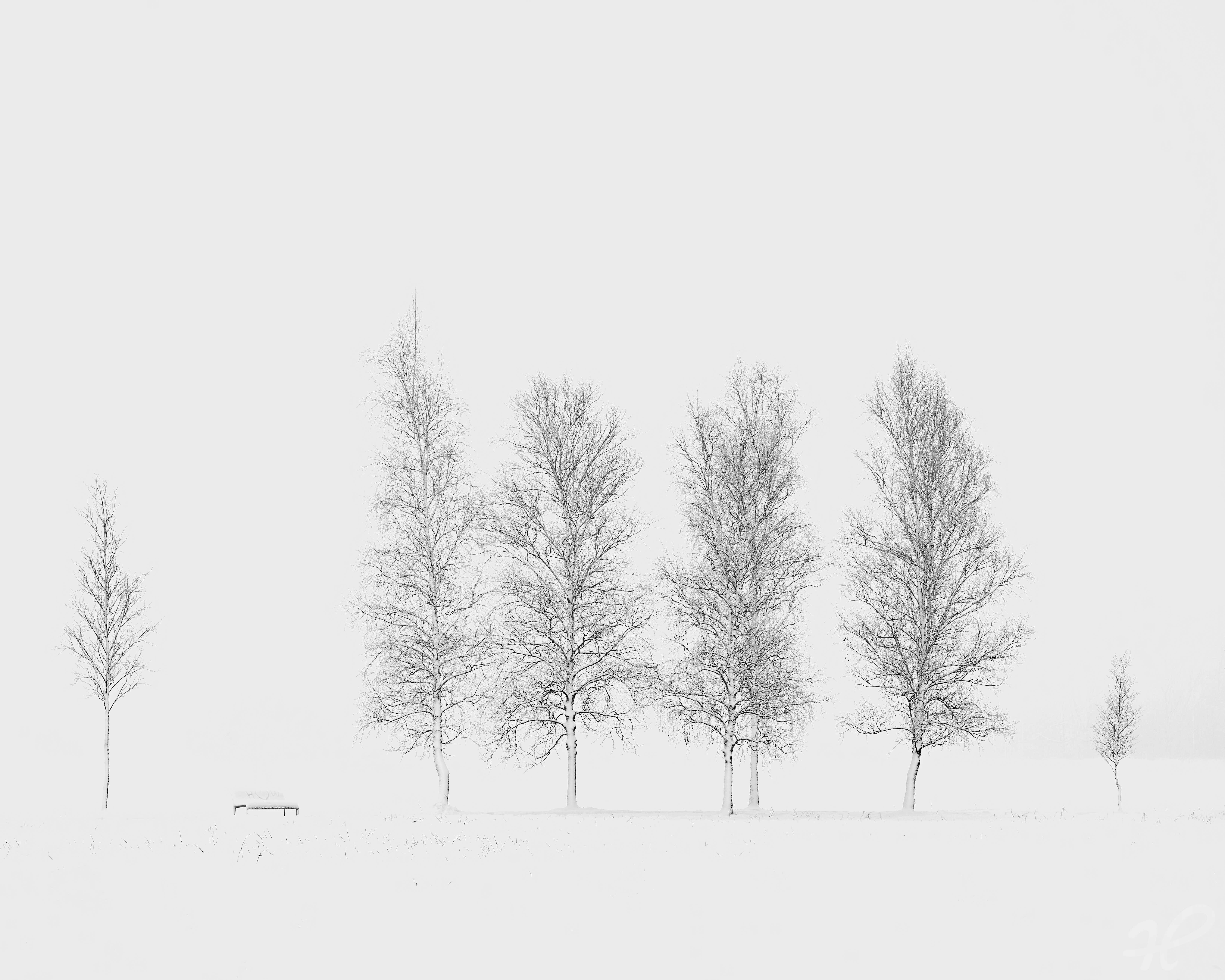 Baumreihe im Schnee 3, minimalistisch