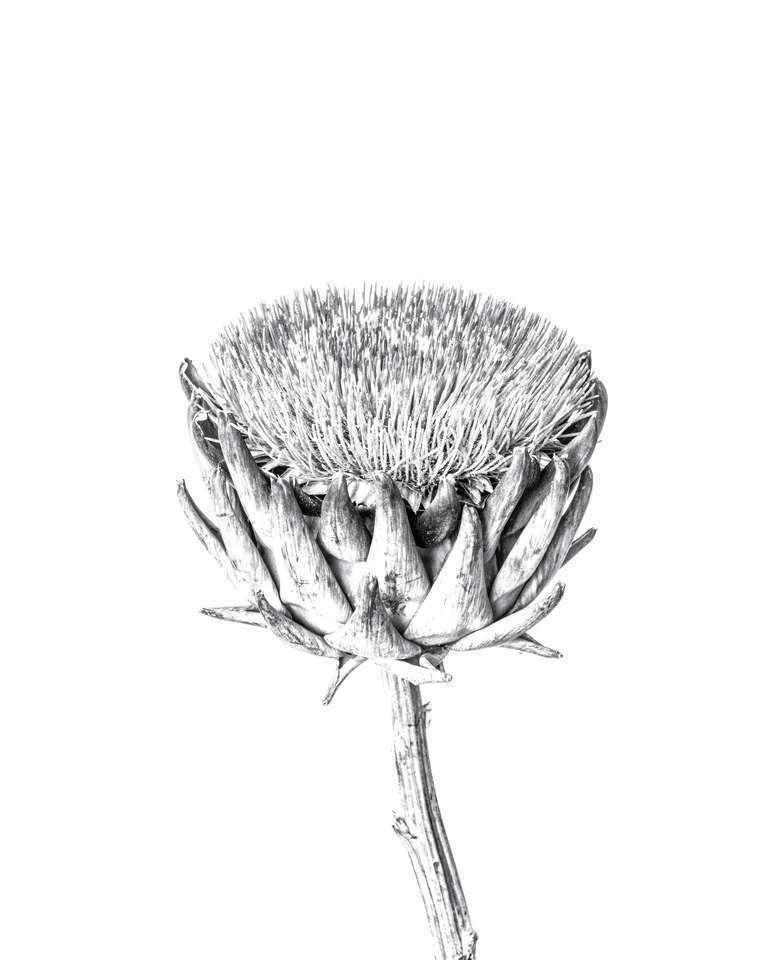 botanical study 15 // minimal botanical project
