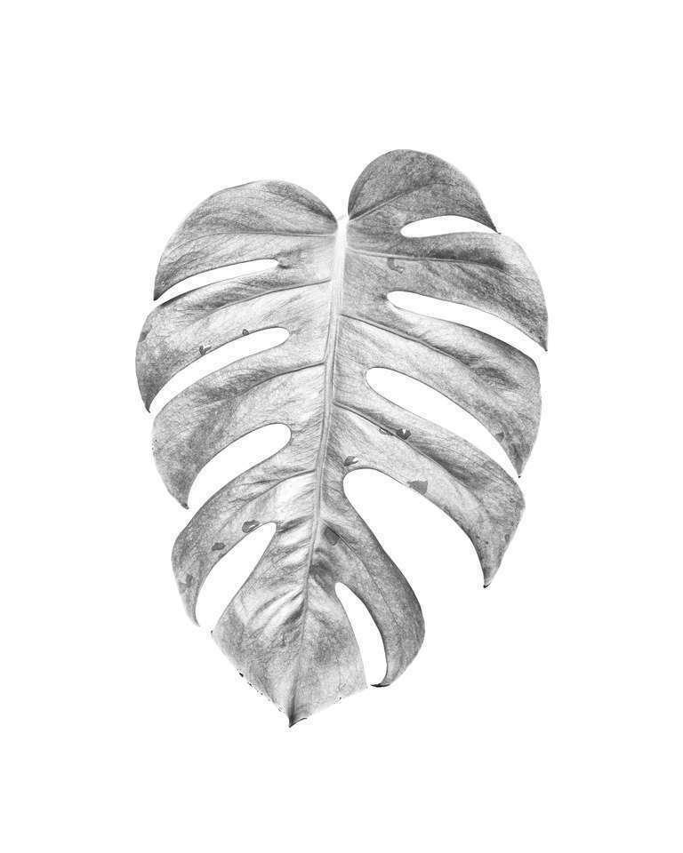 botanical study 65 // variations // minimal botanical project