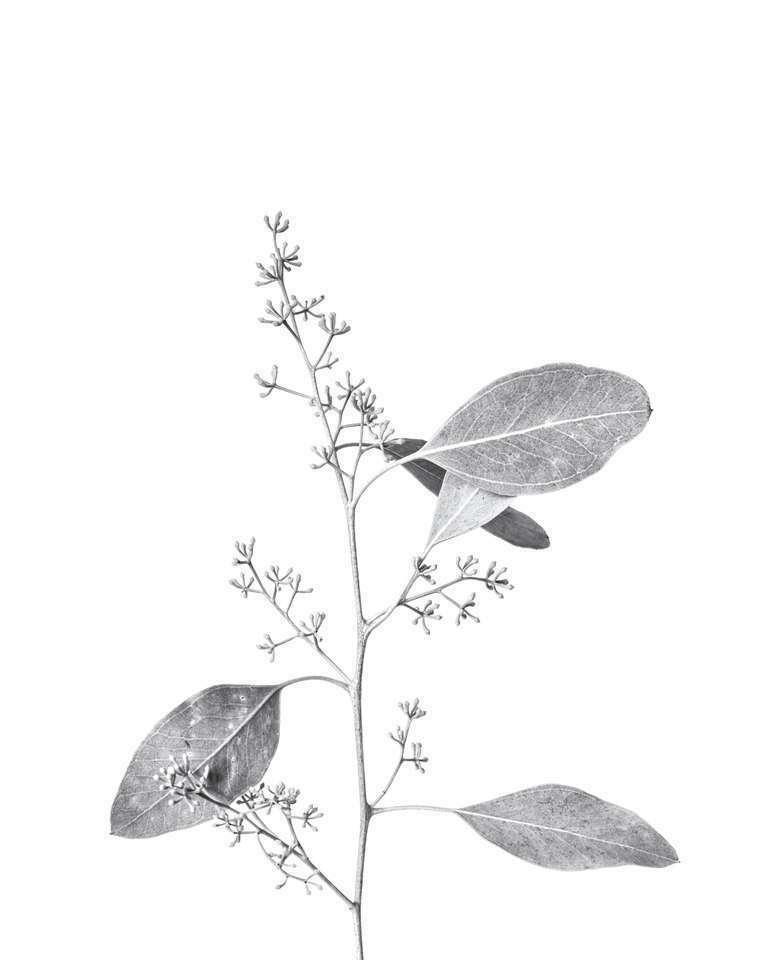 botanical study 21 // minimal botanical project