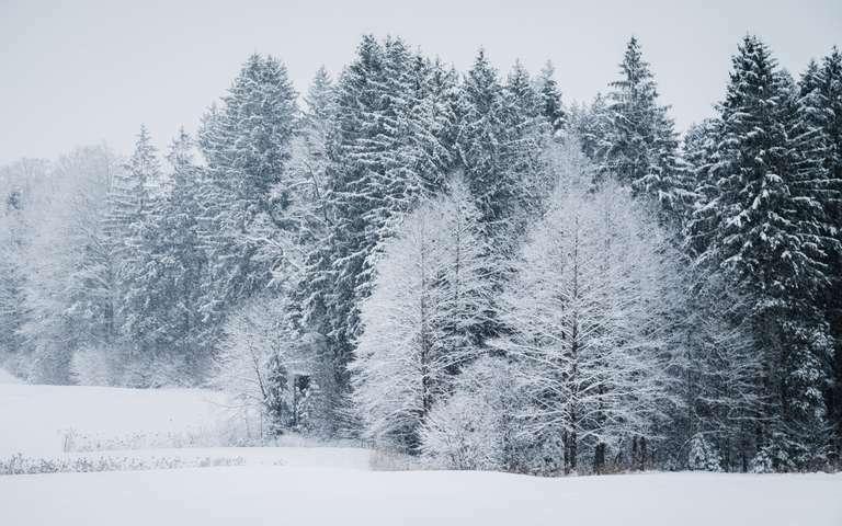 Winterlandschaft im Schnee 3