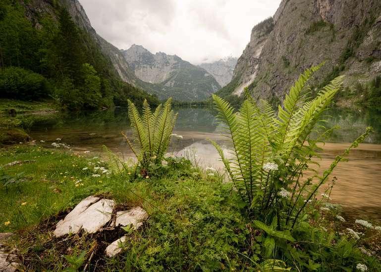 Farne am Bergsee