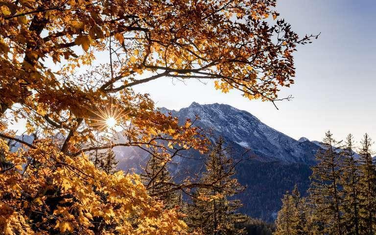 Watzmann im goldenen Herbstlicht