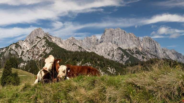 Almidylle in den Alpen