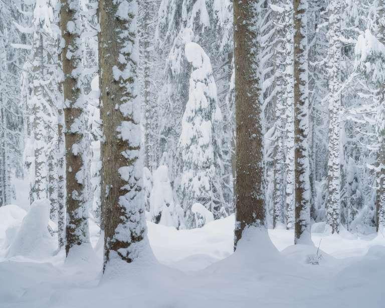 Der Schneegeist