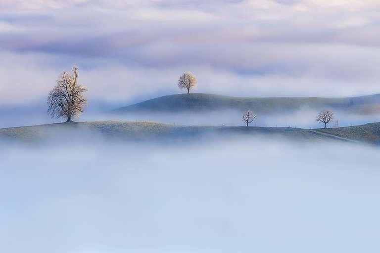 Trees of Calm