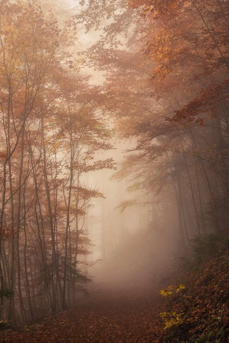Nebelstimmung im Buchenwald