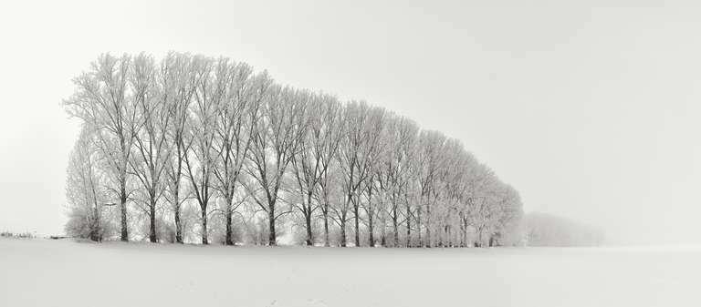 Baumreihe im Winter in der Nähe von Mühlhausen
