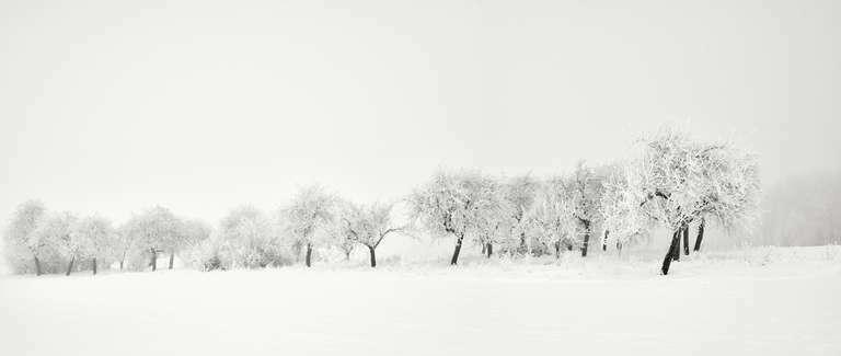 Baumreihe aus Obstbäumen im Winter in der Nähe von Mühlhausen