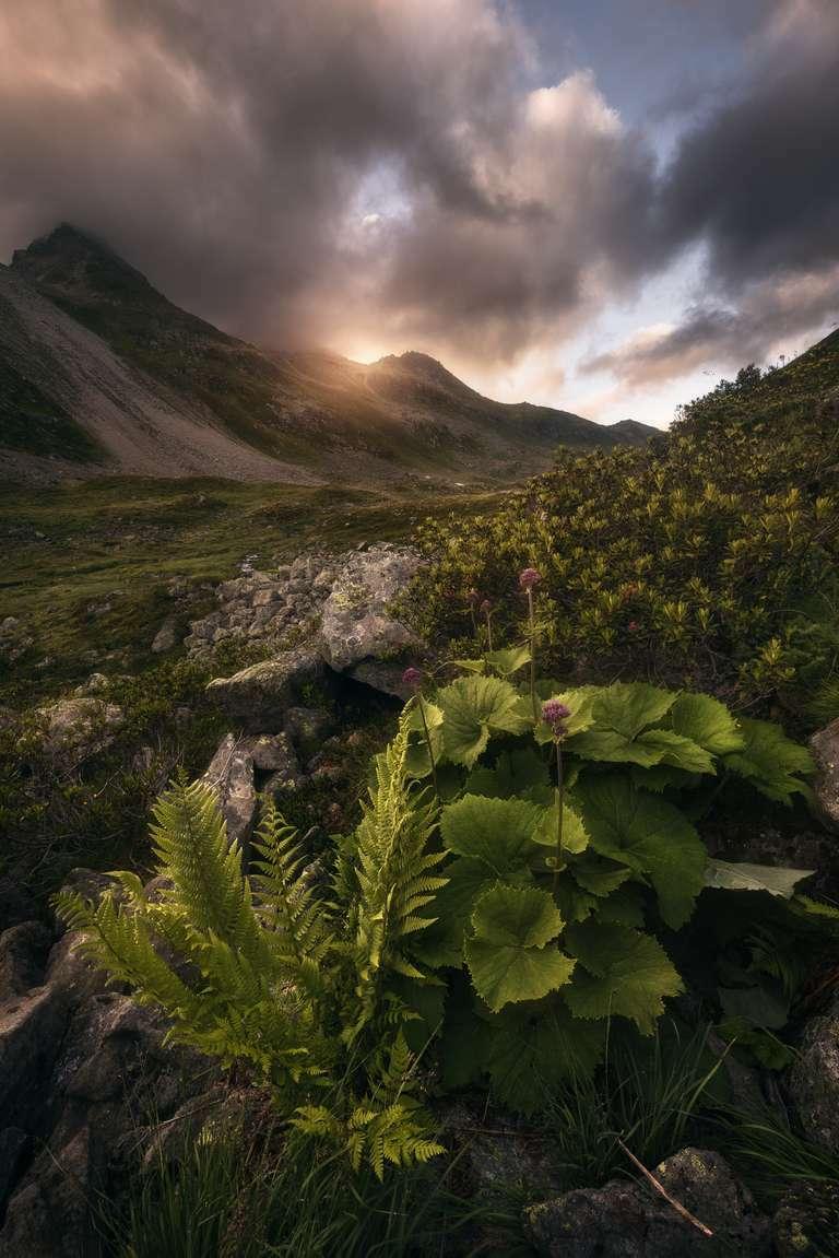 Pflanzenzauber in den Schweizer Alpen