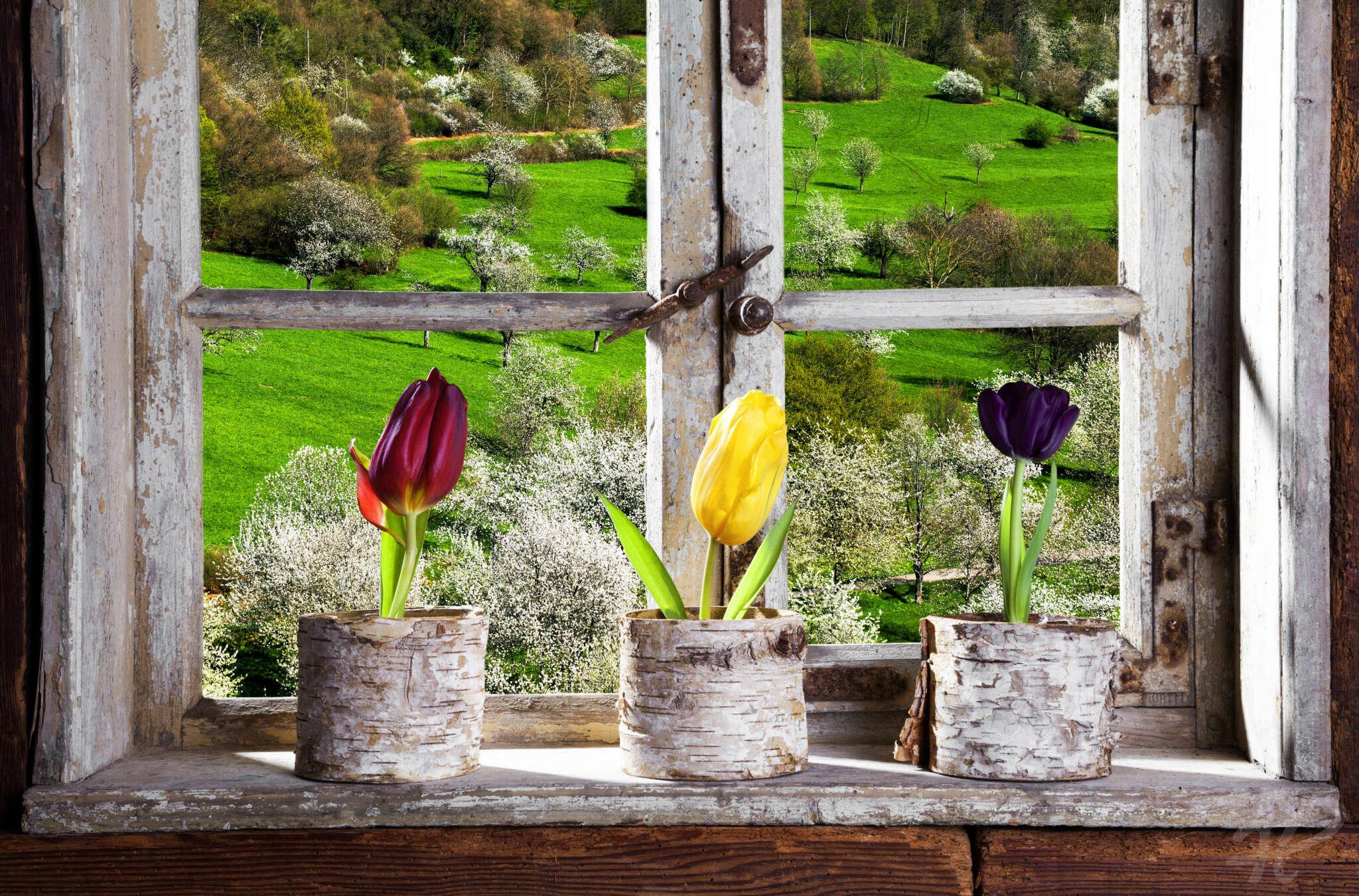 Tulpen am Fenster mit Ausblick