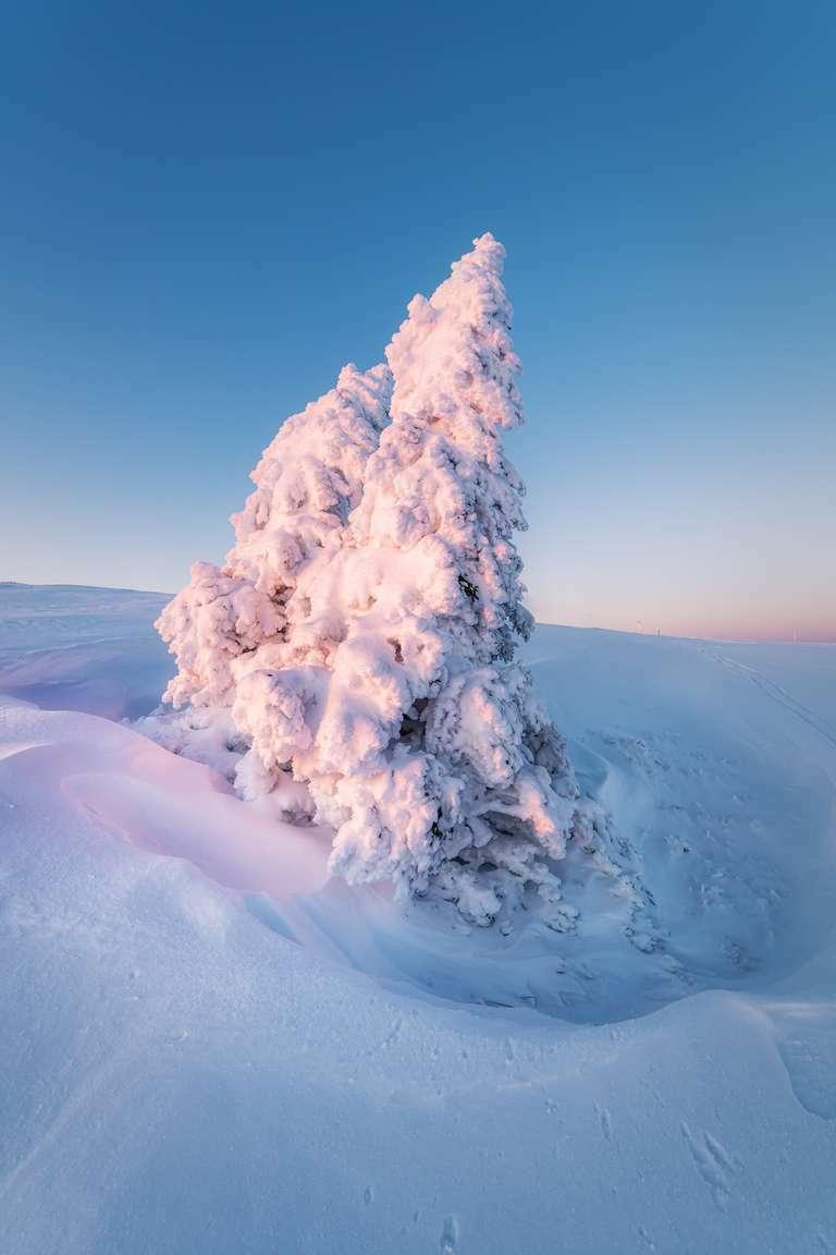 verschneiter Baum auf dem Feldberg