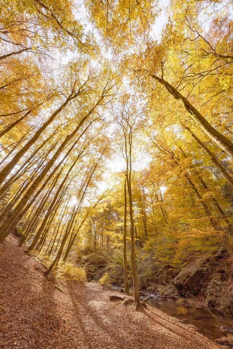 Herbst im Karlstal