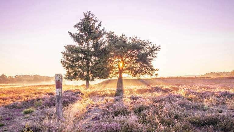 Mehlinger Heide Sonnenaufgang