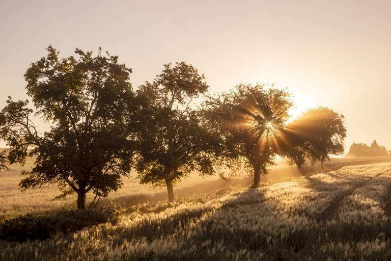 Bäume im Sonnenaufgang