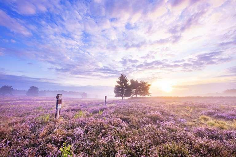 Mystische Mehlinger Heide