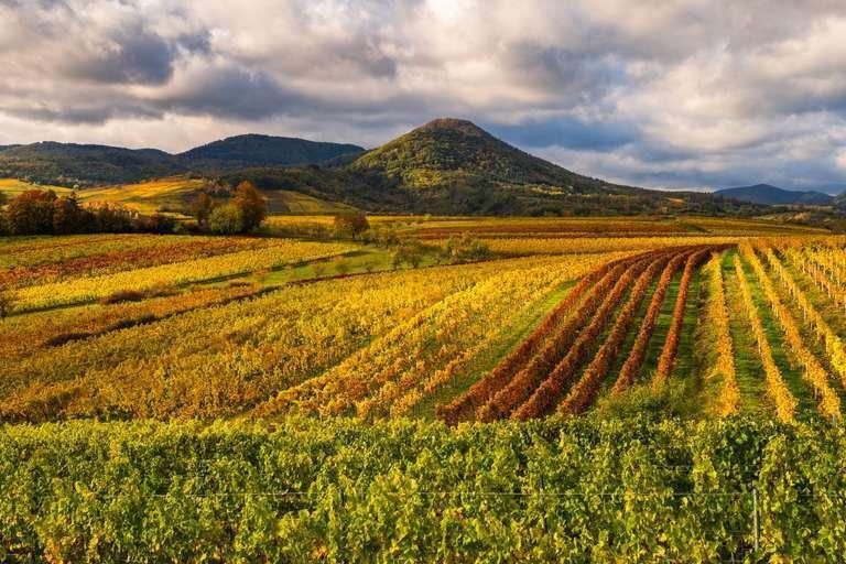 Panorama über die Weinberge der Pfalz