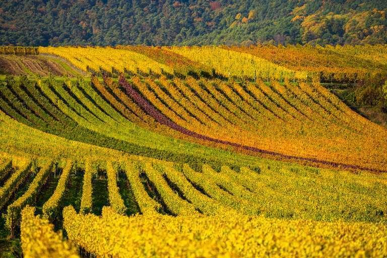 Weinberge der Pfalz