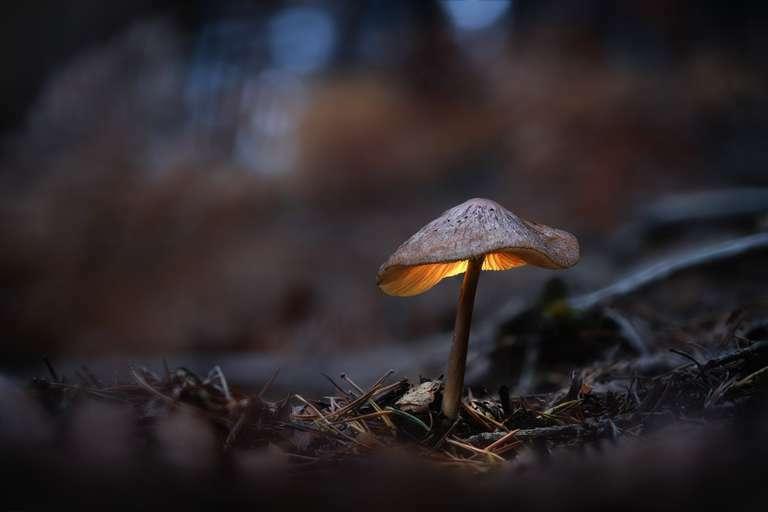Glowing mushroom 1