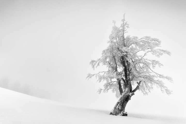 Snowtree 3