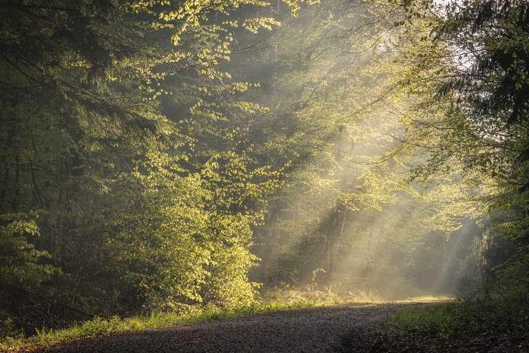 Morgenstimmung im Frühlingswald