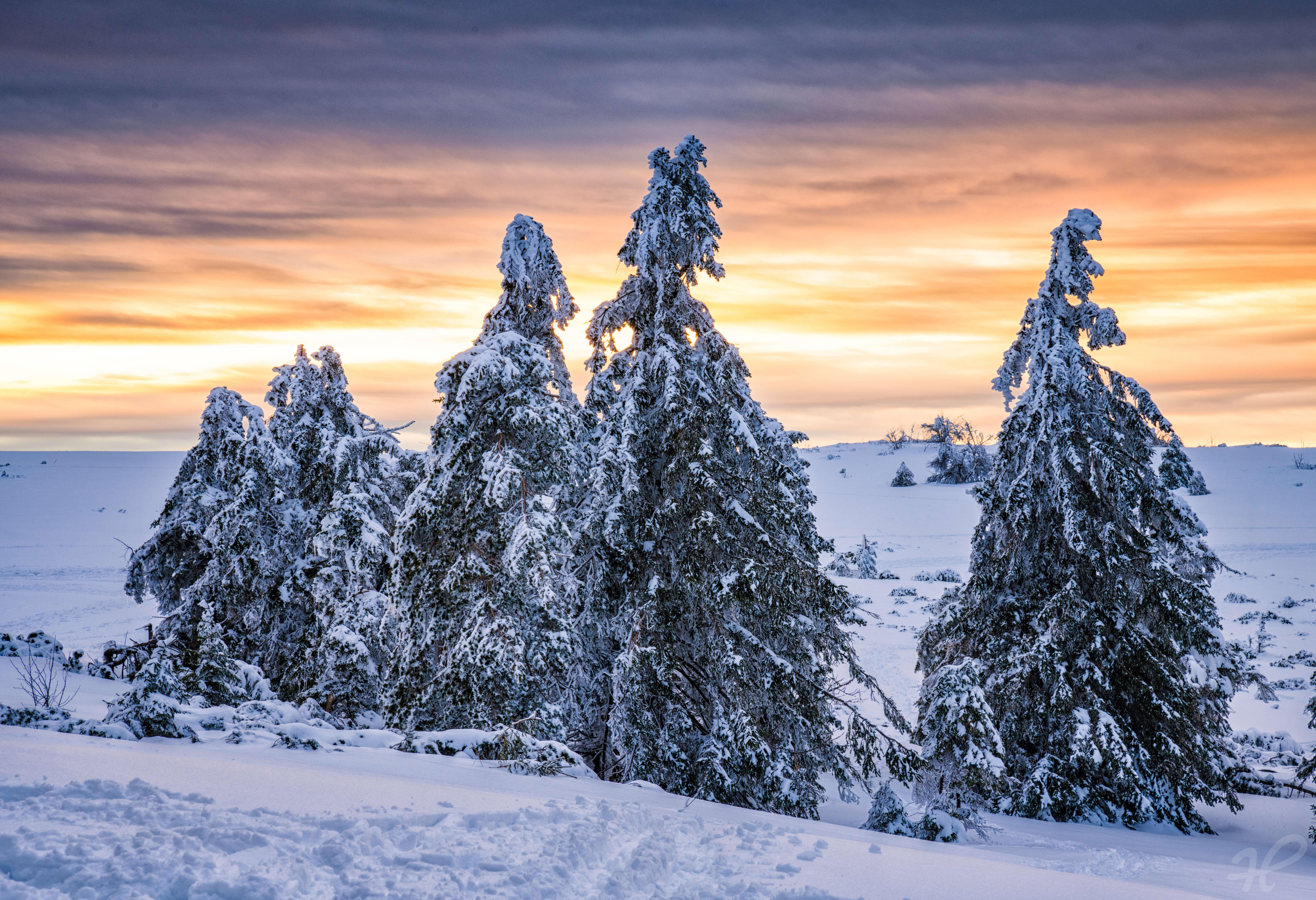 Winterabend im Schnee