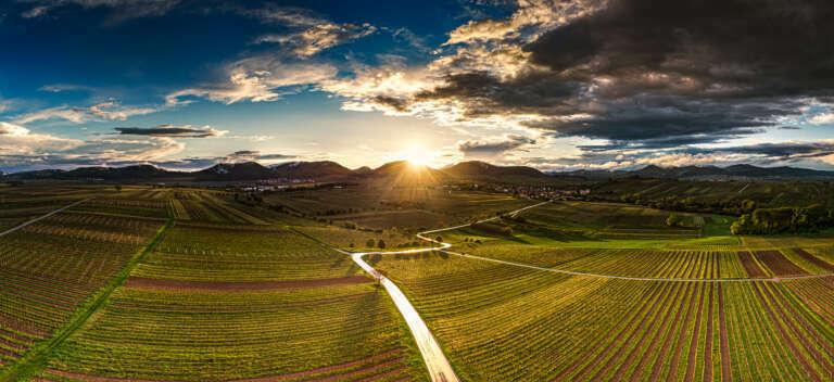 Die Pfalz von oben – Südliche Weinstrasse