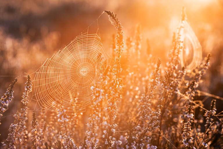 Spinnennetz im Ggenlicht.