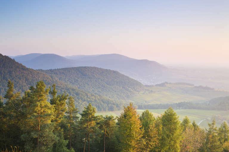 Morgenlicher Blick über die Hügel des Pfälzerwalds vom Föhrlenberg im Herbst